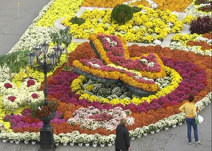 Где купить цветы в севастополе, роза доставкой