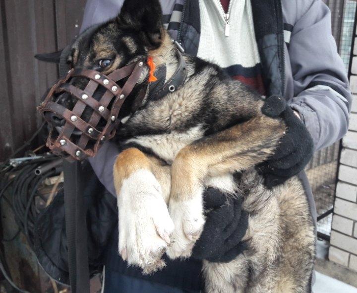 Чтобы спасти собаку со сломанной капканом лапой, пришлось пойти на хитрость…