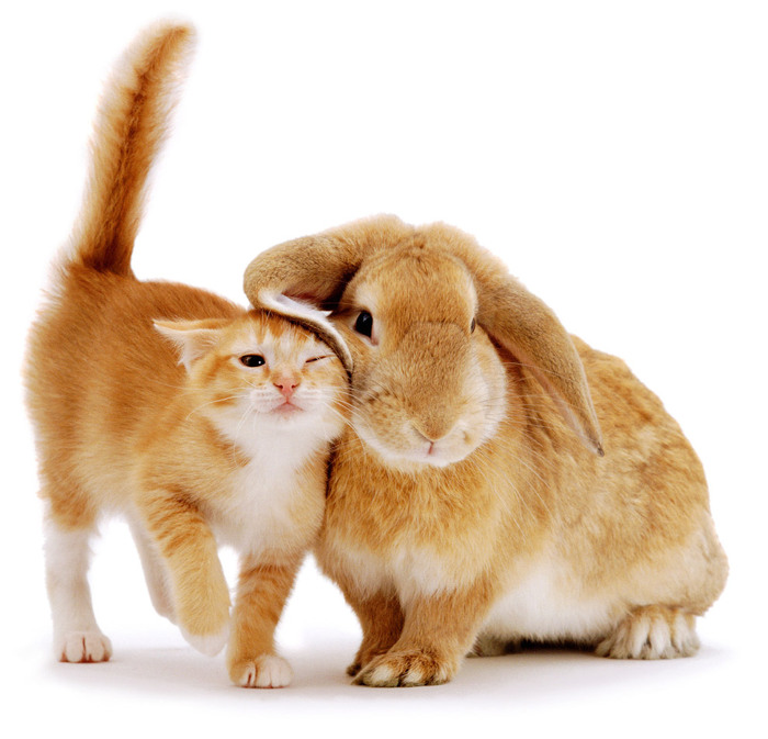 Открыток новым, открытки с котом и зайцем