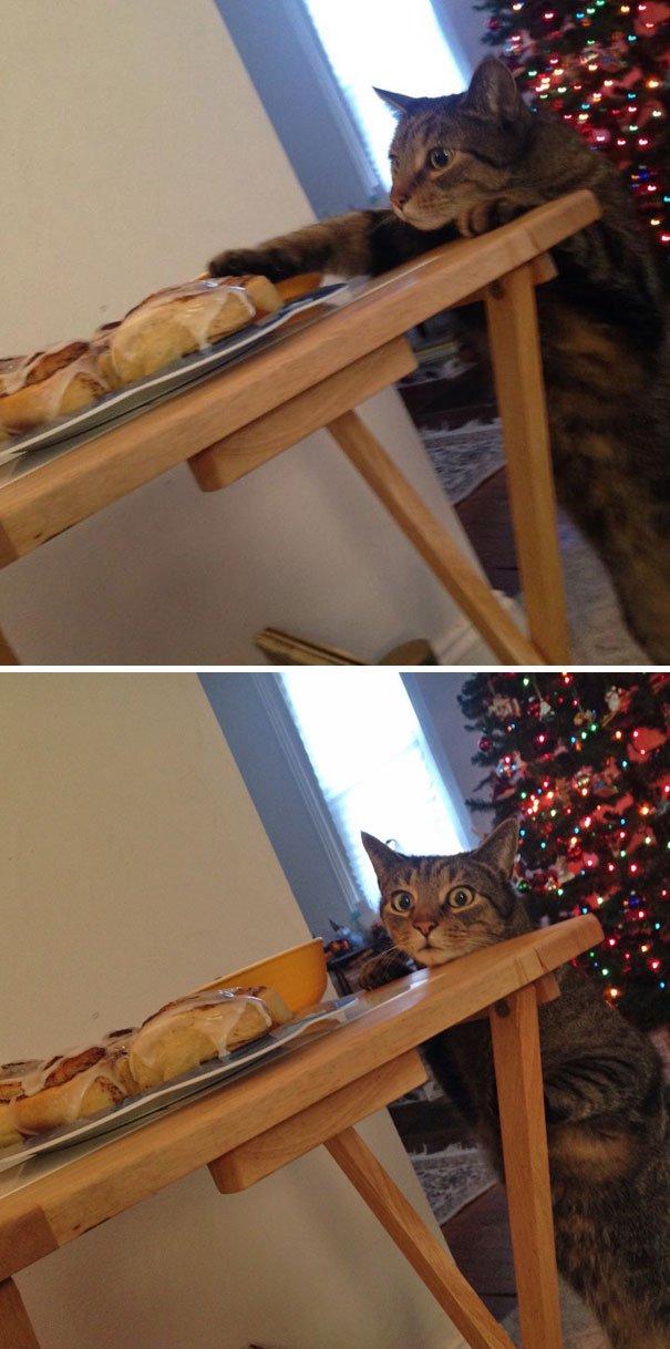 Коты пойманные с поличным! И…
