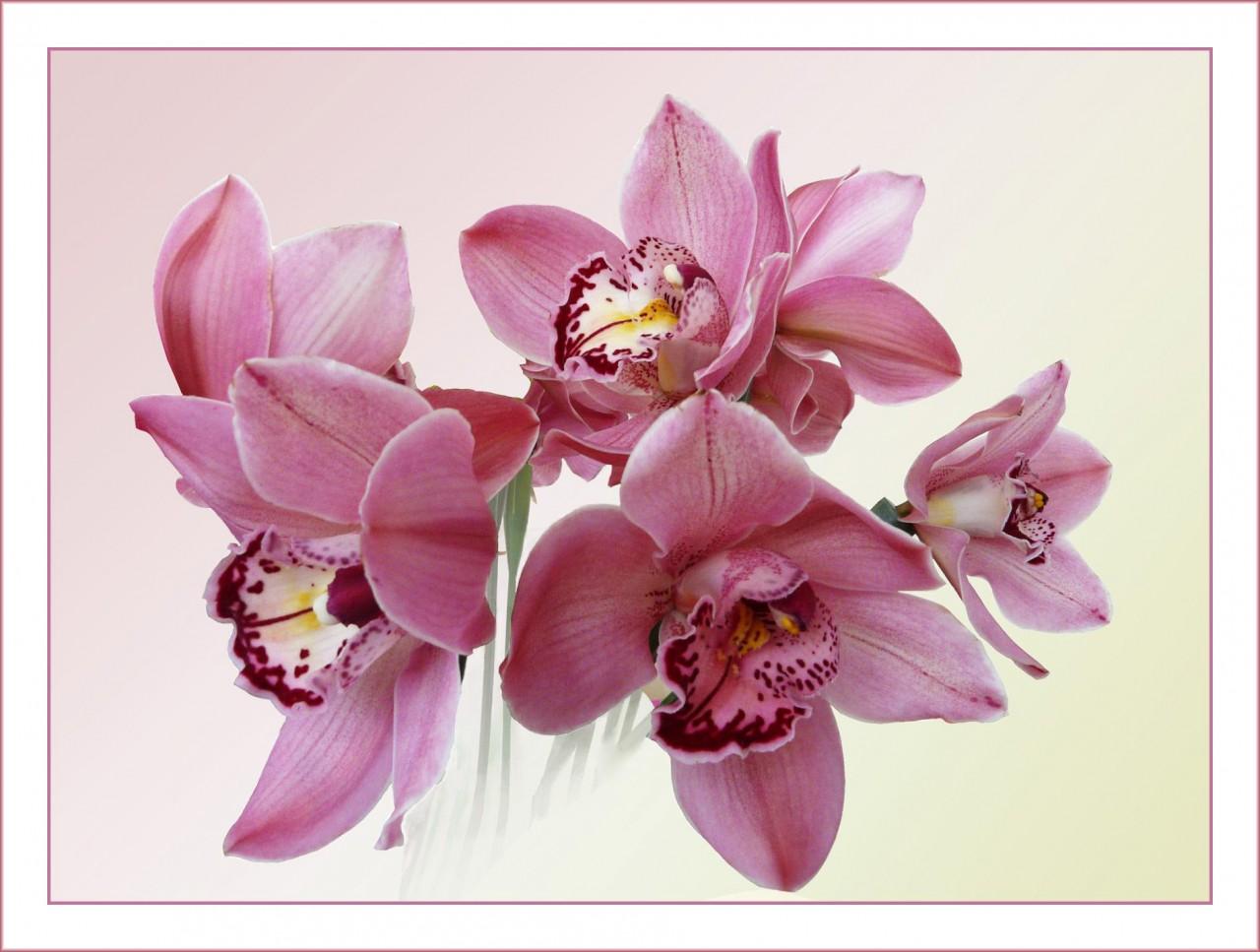 День рождения, открытки с днем рождения орхидеи женщине красивые