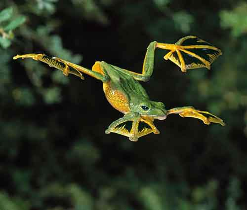 frog-photography-13__880