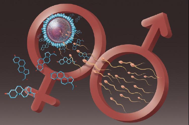 """""""Молекулярный презерватив"""" обещает стать самым эффективным и универсальным контрацептивом"""