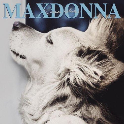 Классный пес позирует лучше Мадонны