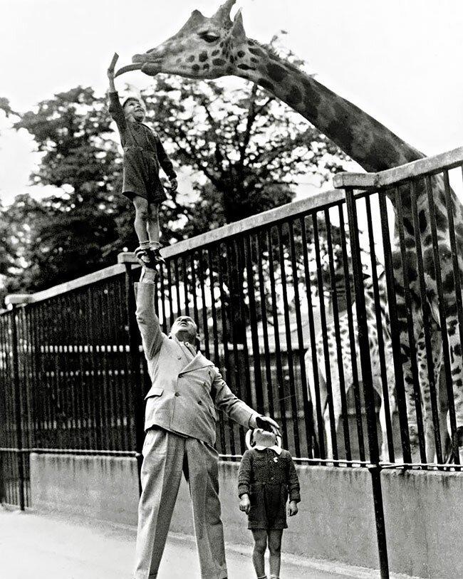 Известный американский силач Пол Ремос с сыном в зоопарке, 1930-е интересно, исторические кадры, исторические фото, история, ретро фото, старые фото, фото