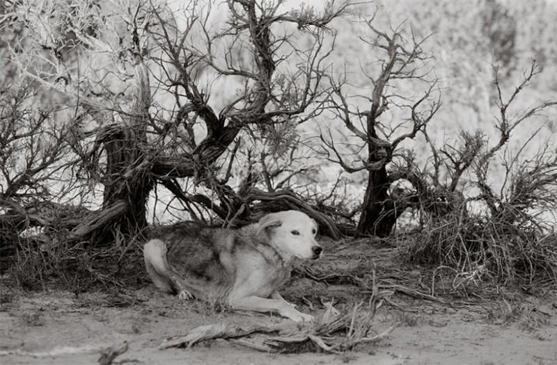 Спрингфезер (17 лет) собаки, фото собак, фотографии животных