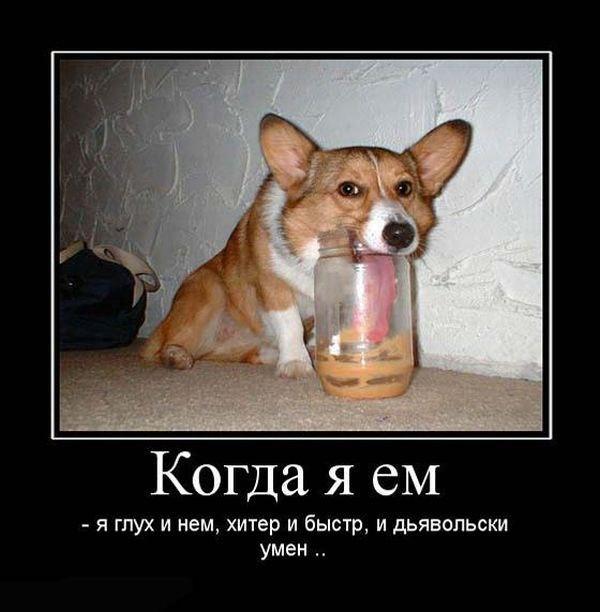 Демотиваторы про собак смешное