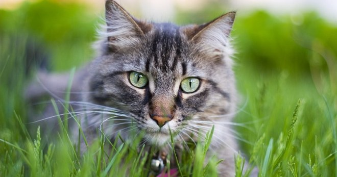 Сонник – кот – к чему снятся коты женщине?