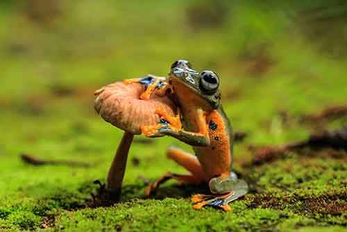 frog-photography-8__880
