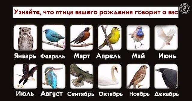 Что птица скажет о Вас по ме…