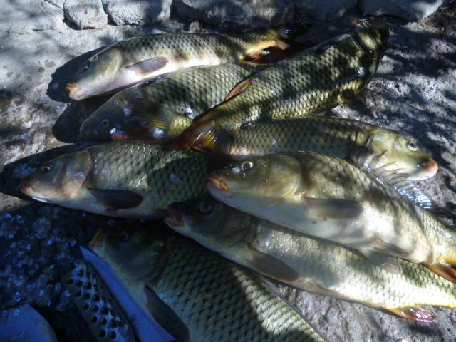 №764. СЕНТЯБРЬСКИЙ ВЫЕЗД на рыбалку Южный Казахстан