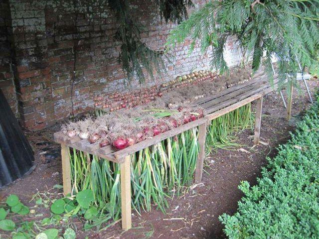 Приспособы для сада своими руками из подручных материалов самоделкин