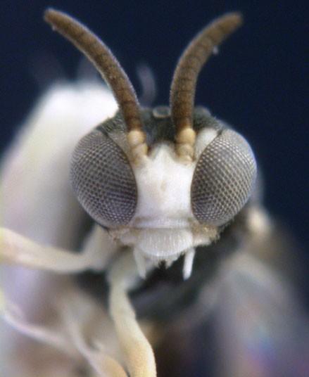 Новые виды животных и растений в 2012 году