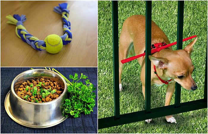 Хитрости, которые будут полезны всем владельцам собак