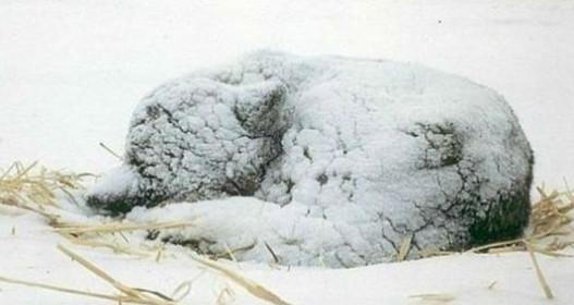 Пытаясь помочь замёрзшей в снегу собаке, люди с ужасом обнаружили, что она что-то прятала под собой...