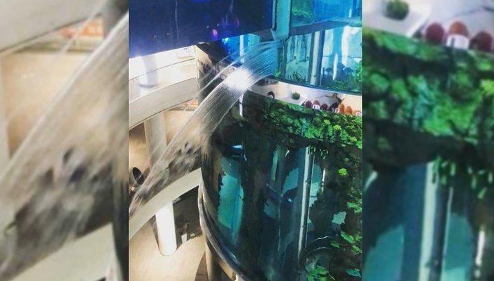 Как сажать водоросли в аквариум с фото днем