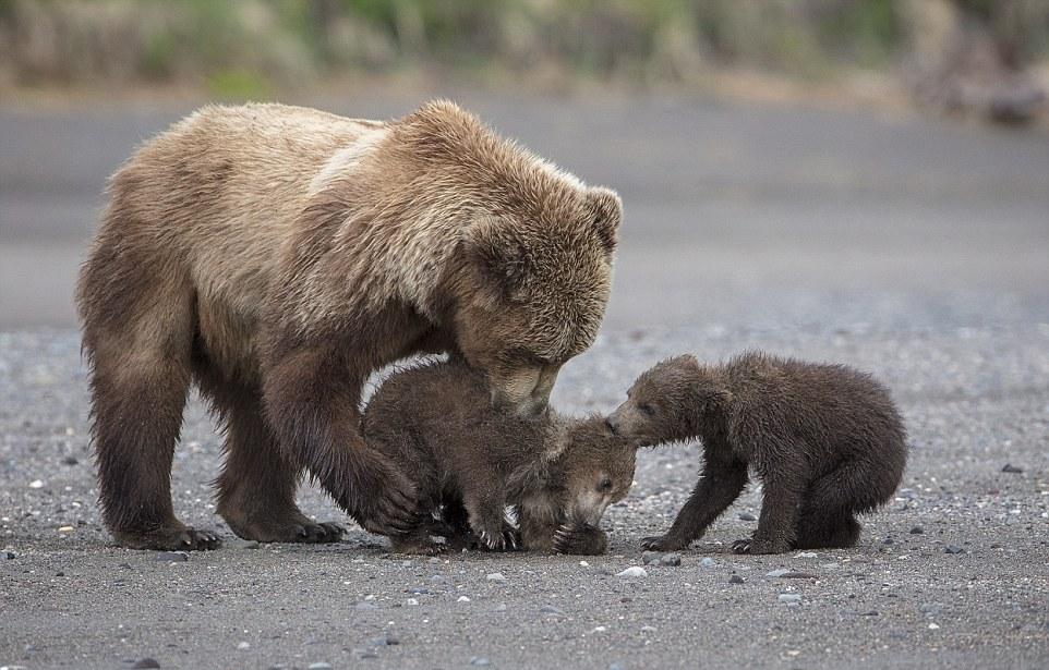 Мама-медведица и ее детки