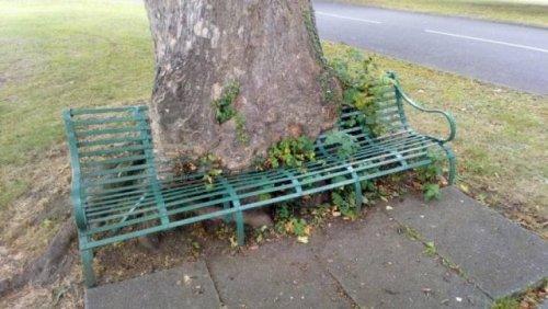 Деревья, которые поглощают всё на своём пути