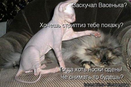 стриптиз)