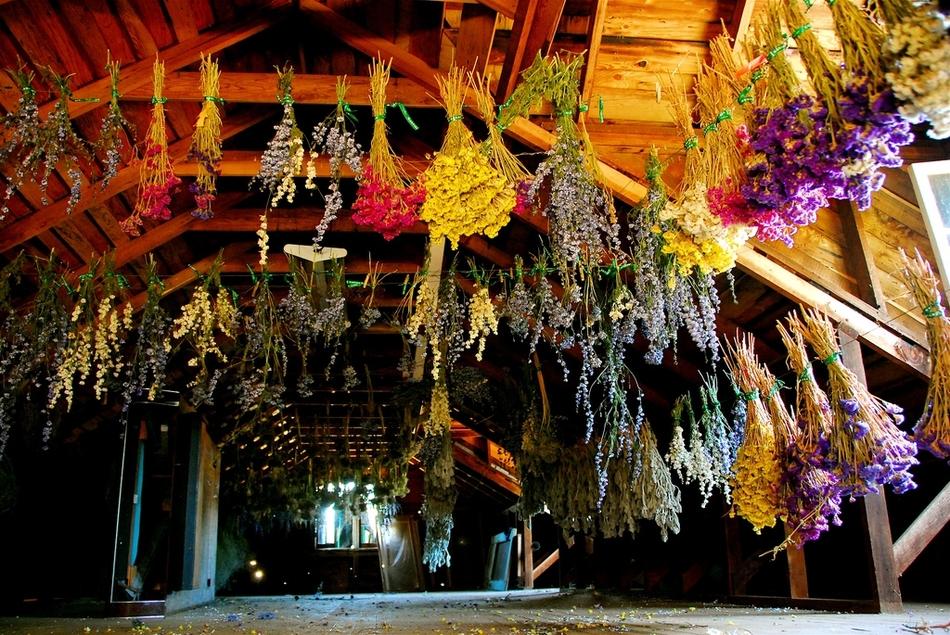 Как сушить цветы для букетов