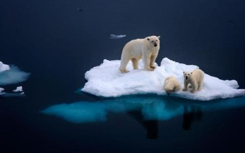 На большой огромной льдине
