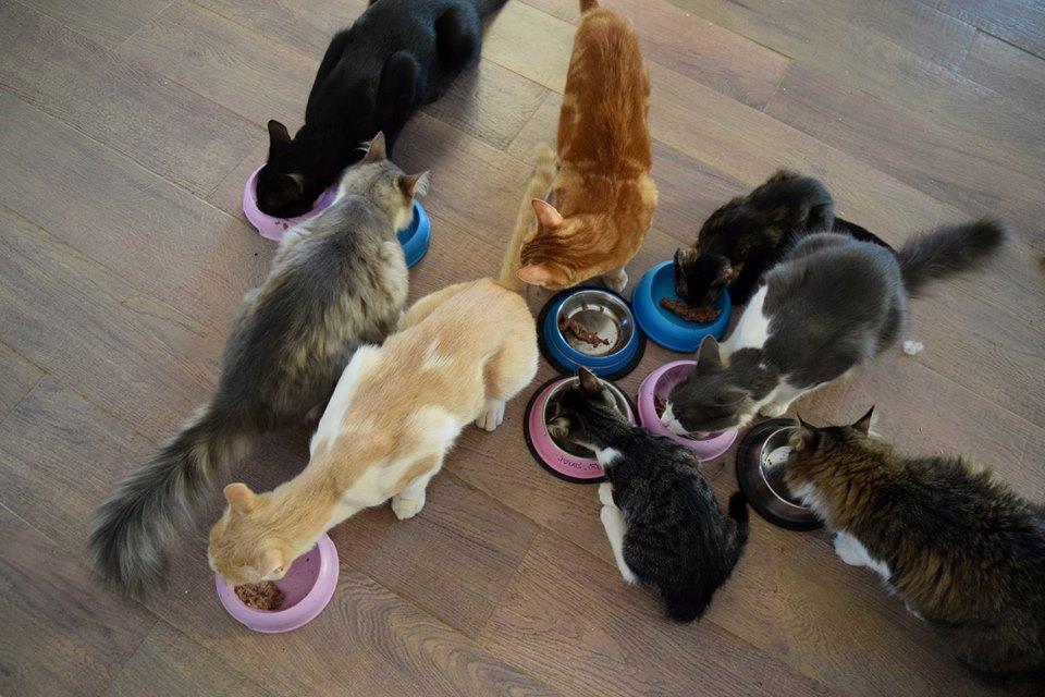 Идеальная вакансия для любителя кошек