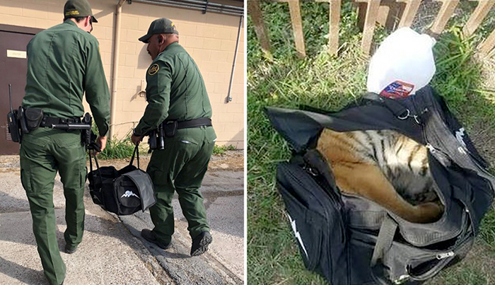 Неожиданная находка пограничников в сумке, оставленной незаконными иммигрантами