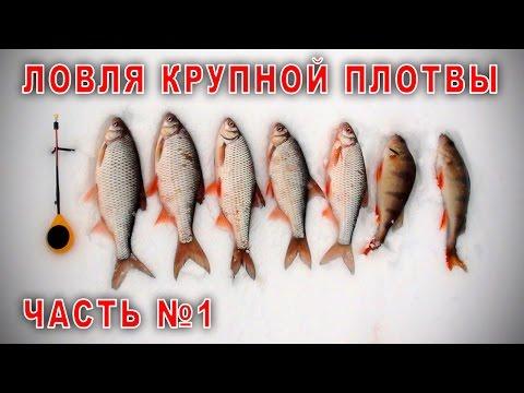 Рыбалка на севере 2017 5 Ловля крупной плотвы. Часть №1