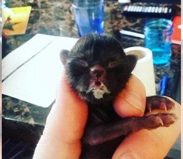 Ветеринар выходила котенка, который весил всего 37 грамм