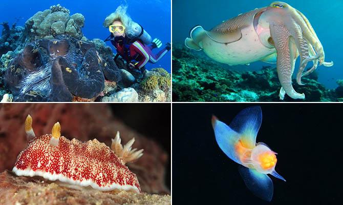 Интересные факты о моллюсках + Видео