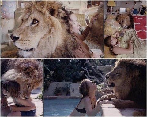 Фотографии льва, который ста…
