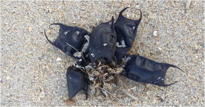 На пляжах Северной Каролины появились сумки, которые не имеют никакого отношения к человеку