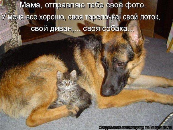 Смешные картинки с кошками и собаками с надписями, поздравления добрым утром