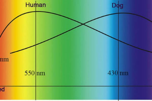 Как видят собаки