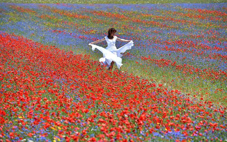 Цветущие поля Италии