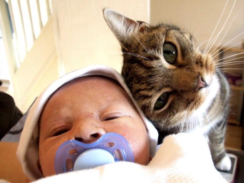 Смешные картинки дети коты, мая