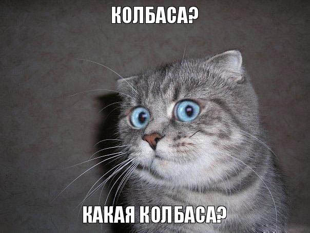 Кошачья забота))