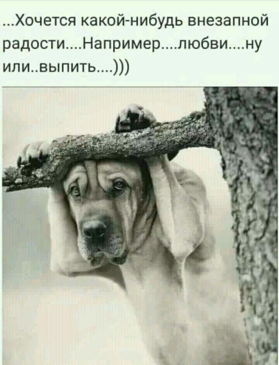 http://mtdata.ru/u19/photo8786/20667085203-0/original.jpg