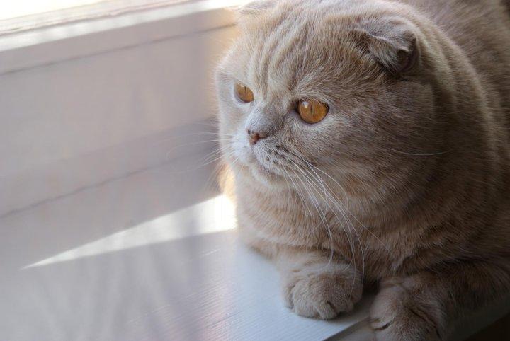 """""""Кто-то скажет, что коты не умеют быть преданными. И знаете что? У них просто никогда не было кота"""""""