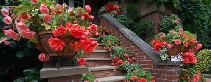 Какие и как лучше посадить цветы в уличные кашпо