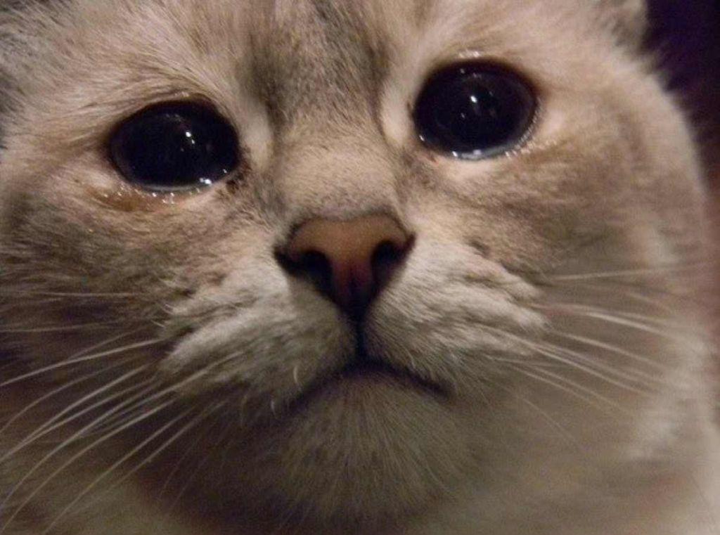 день, котята плачут фото психолог