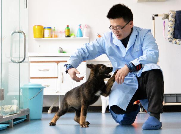 ВКитае клонировали лучшую полицейскую собаку: фото ивидео