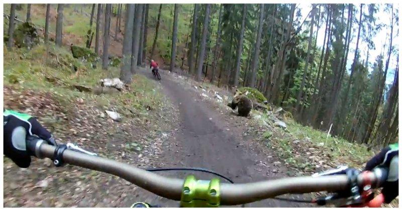Ничто так не заряжает во время катания на велосипеде, как медведь, бегущий за тобой!