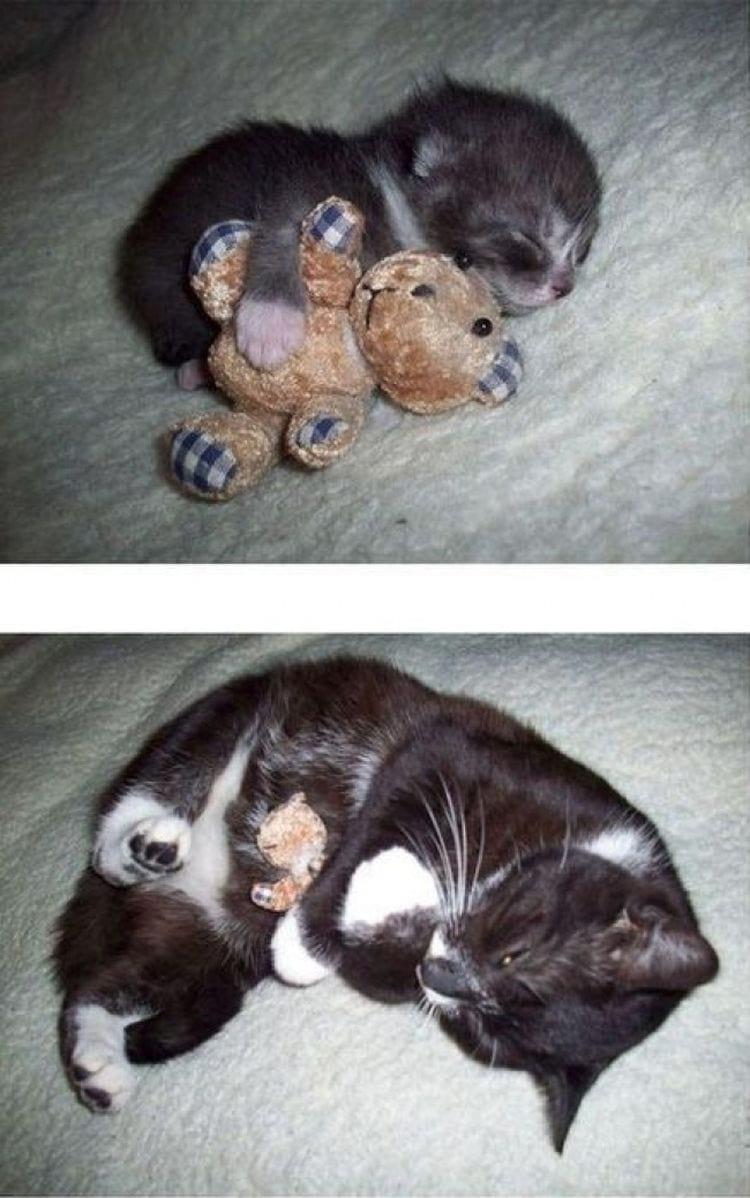 10 доказательств того, что коты растут ну очень быстро