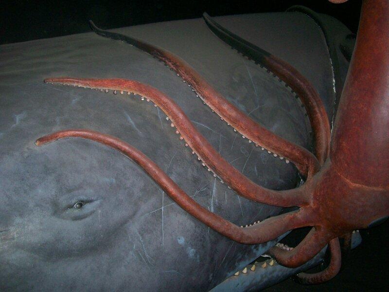 Самое загадочное животное планеты Земля животные, загадка, интересное, под водой, природа, факты