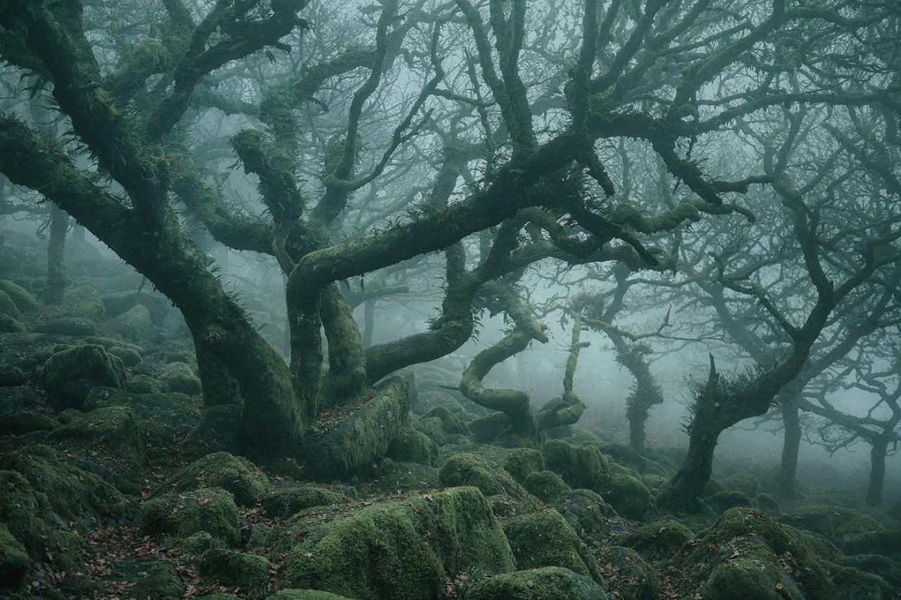 Лес Нила Бернелла (5).jpg