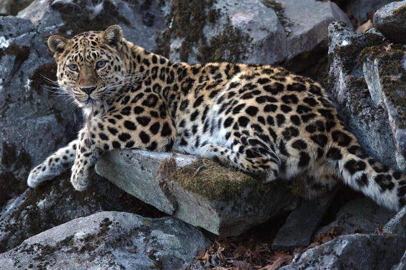 Южное Приморье — заповедник «Лазовский» животные, заповедник «Лазовский», природа, факты