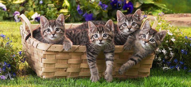 к чему снится много котов