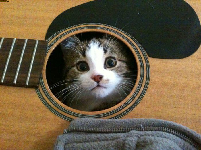 15 мест, где никак не ожидаешь увидеть кота
