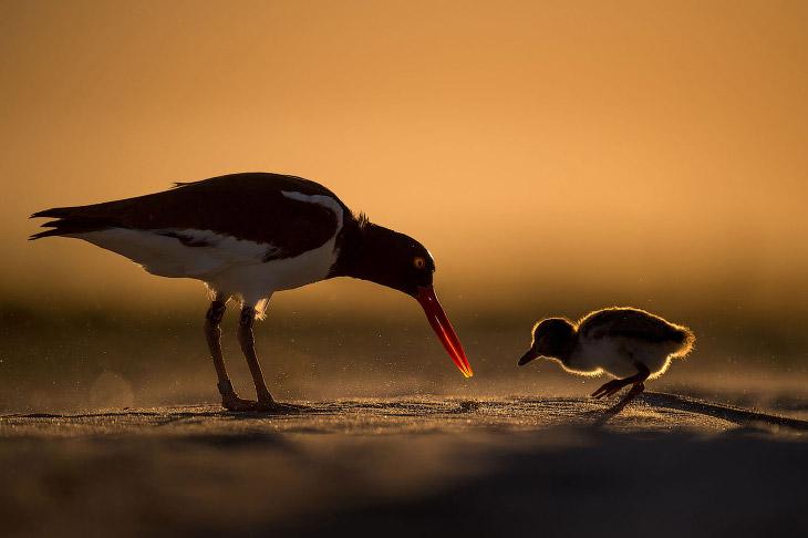 Птичий конкурс Audubon Photography Awards 2018